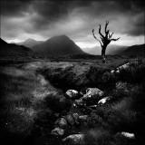 Dead Tree Rannoch Moor.