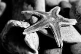 Starfish. Findhorn.