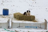 Sheepsdog found a warm place to rest