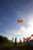Kite flying (8020)