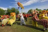 Lion dance performance (8302)
