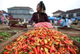 Red hot chili pepper (Bali)