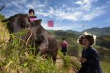Farmer and buffalo (China)