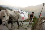 Farmer and horse (China)