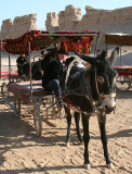 Our Donkey Cart (Oct 07)