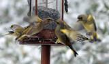 garden_birds_with_snow