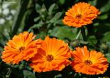 14.2 Megapixels of Flowers