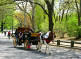 In wheelchair at Central Park