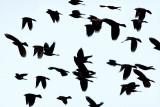 The Birds