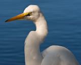 Egret on Blue