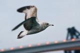 Gull and Acosta Bridge