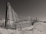 Fence and Posts
