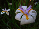 One More Flower