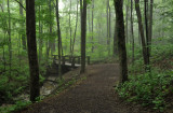 Rowe Woods Woodland Trails
