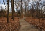 Rowe Woods Woodland Trail