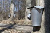 Syrup Buckets