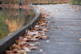 Walkway Autumn Curves