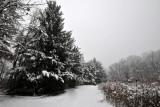 Rowe Woods Snow Storm