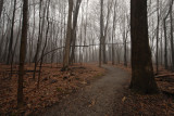 Woodlands Walk