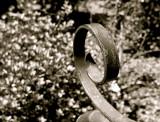 Iron Curl