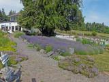 Sequim & Lavender