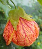 Flower in Anton Valley