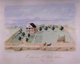 Joseph Billion Delhommer Plantation