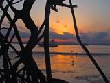 Mangrove Sundown