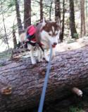 Log Hopping