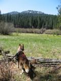 Yosemite Wawona Camping Apr 2010:  A Boy and His Dog