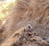 The Bedouin Sentry