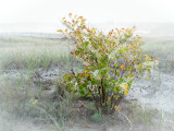 Mist In The Marsh