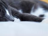Fast Asleep by JolieO