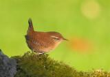 East Lothian Garden Birds