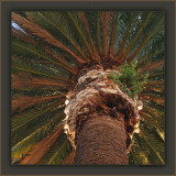 The Kissing Palm