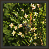 A Fly In My Hedge Fun