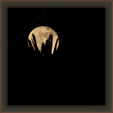 I Offer The May Moon From My Palm