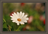 Four Corners If A Daisy Were Square