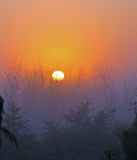 leaving home sunrise (p:srwr)