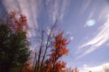fall__winter_moonlight