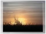 Lever soleil dans la brume - Foggy sunrise