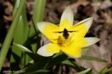 Fleur et insecte