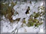 Verglas - Ice Storm 22 novembre 2007