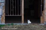 Waiting Kitty