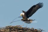 Bringing Nest Materials