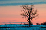 Lone Tree at Twilight