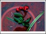 Berries In Pot