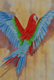 Red and Green Macaw (15x22)