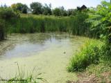 Amphibian pond, Fletcher Wildlife Garden