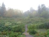 Early morning mist near the Amphibian Pond